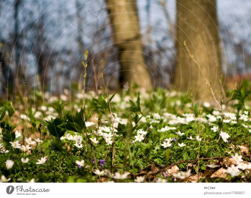 fruchtbarer Waldboden Zufriedenheit Sommer Garten Umwelt Pflanze Schönes Wetter Baum Blume Gras Moos Blühend laufen leuchten träumen verblüht Wachstum warten