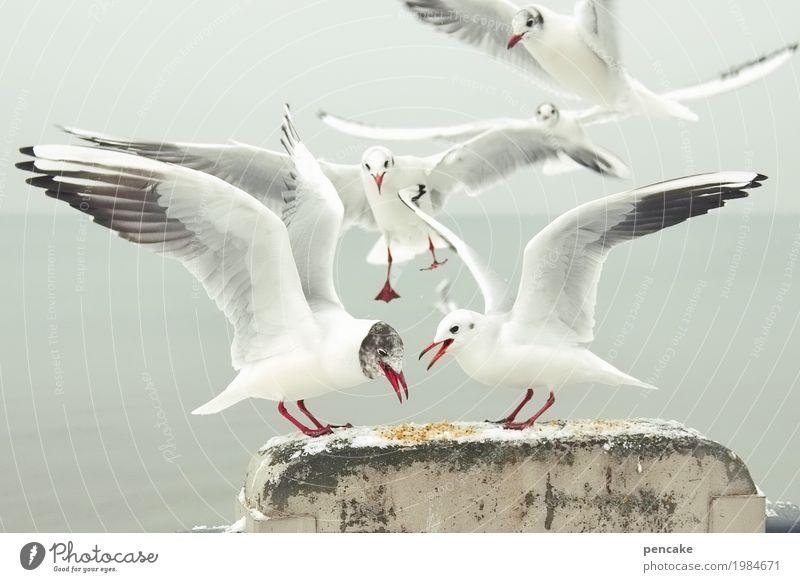 ringelrein | am futterplatz Natur Landschaft Winter Eis Frost Alpen Seeufer Vogel Tiergruppe Fressen füttern kämpfen Möwe Bodensee Futterplatz Farbfoto
