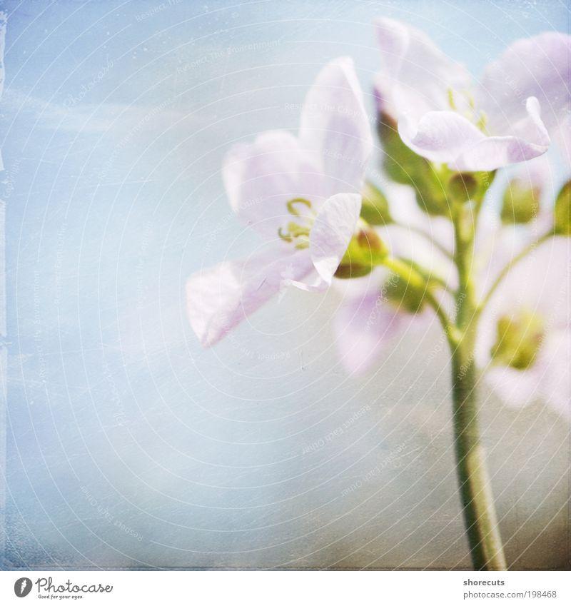 endlich frühling Umwelt Natur Pflanze Frühling Schönes Wetter Wärme Blüte Wildpflanze Park Wiese ästhetisch Fröhlichkeit frisch schön Gefühle Freude Glück