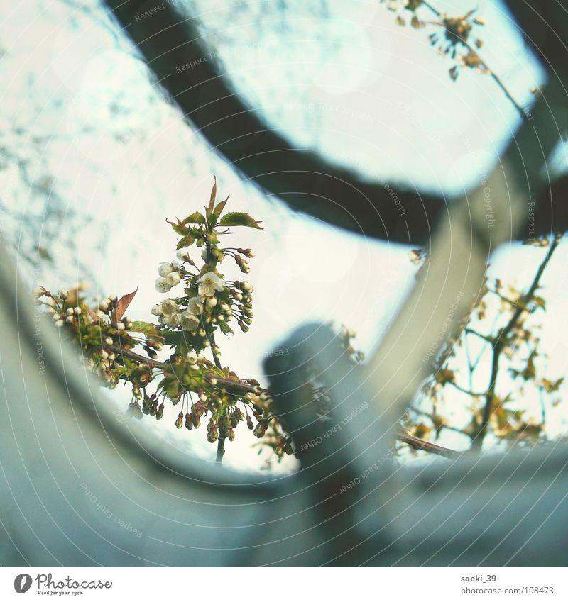 view outside Natur Pflanze Himmel Frühling Baum Blüte einfach Freundlichkeit positiv Stimmung Lebensfreude Frühlingsgefühle Mut Farbfoto Außenaufnahme Tag Licht