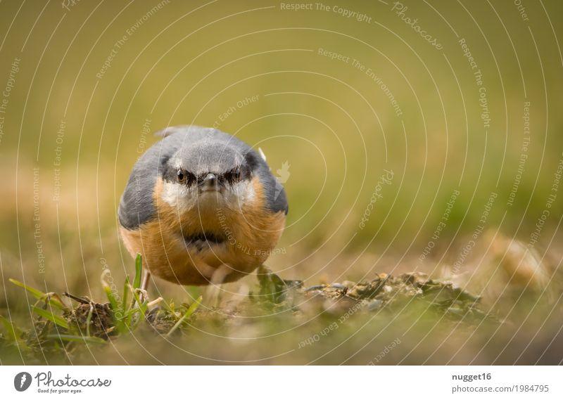 noch ein Bild und du bist dran! Kleiber Natur blau Sommer grün Tier schwarz Umwelt gelb Herbst Frühling Wiese Gras Garten braun Vogel orange