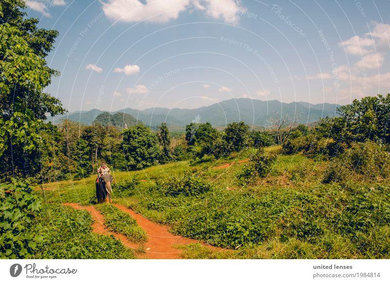 FF# Expedition Kunst ästhetisch Urwald Elefant Wege & Pfade grün Grünpflanze Grünfläche abgelegen Ferien & Urlaub & Reisen Tourismus Urlaubsfoto Urlaubsstimmung
