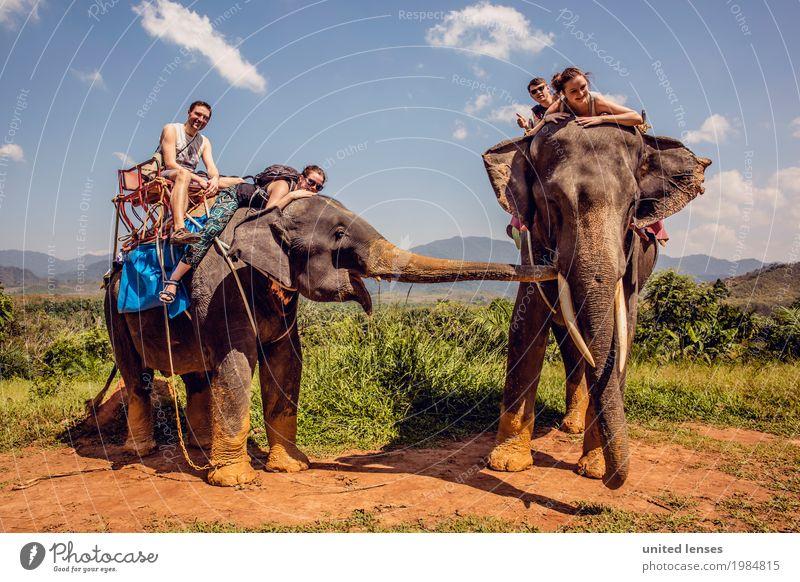 FF# Buddytag Tier Abenteuer Elefant 2 Außenaufnahme Freude Fernweh Expedition Ferien & Urlaub & Reisen Urlaubsfoto Urlaubsstimmung Urlaubsort Urlaubsverkehr