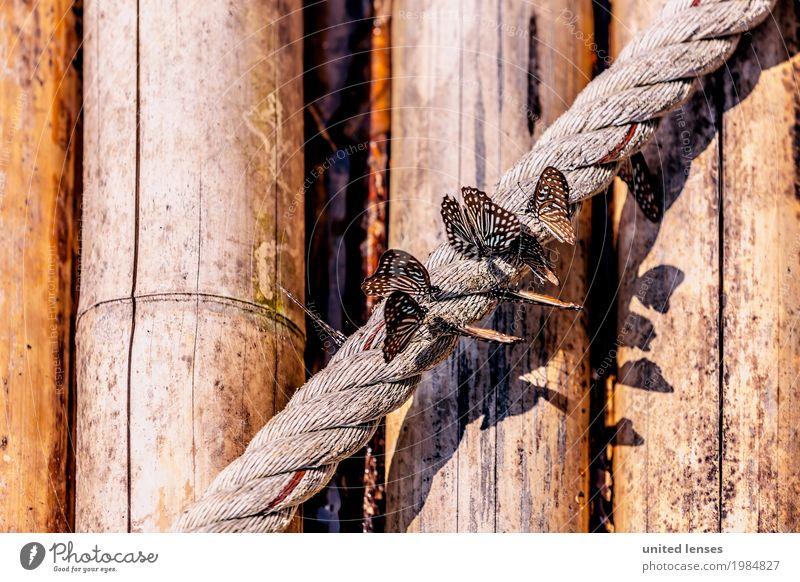 FF# Leichtigkeit Natur ästhetisch Seil Holz Holzwand Schmetterling Schmetterlinge im Bauch schön Wegrand Flügel Menschengruppe Schwarm Idylle Farbfoto
