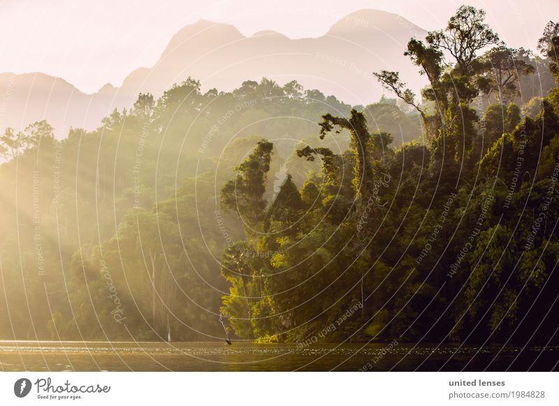 FF# Morgen im Paradies Umwelt Natur Klima Klimawandel Wetter Schönes Wetter Garten ästhetisch Urwald Wald Küste Amazonas Thailand grün Licht Idylle Baum