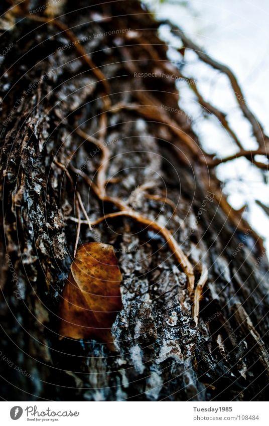 That leaf is not fallen... Baum Pflanze Blatt Umwelt Park Schutz Licht Wildpflanze