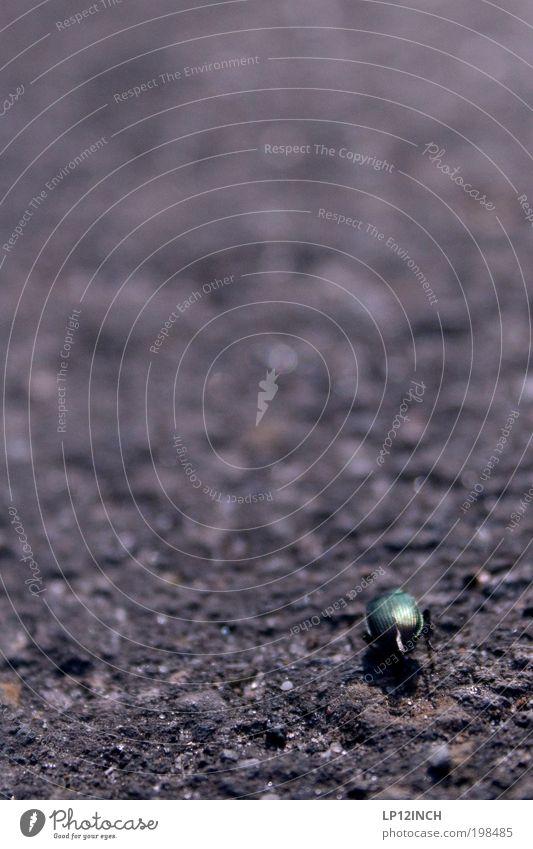 a bug's ass Natur Sommer Tier Ferne Umwelt Bewegung Garten Park Erde Angst laufen Unendlichkeit anstrengen Käfer Respekt Umweltschutz