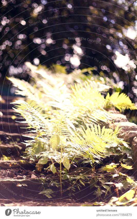 AK# Farn I Umwelt Natur Garten Park ästhetisch Echte Farne Farnblatt Treppe alt bewachsen Ruine grün Außenaufnahme Wald Wegrand Farbfoto mehrfarbig