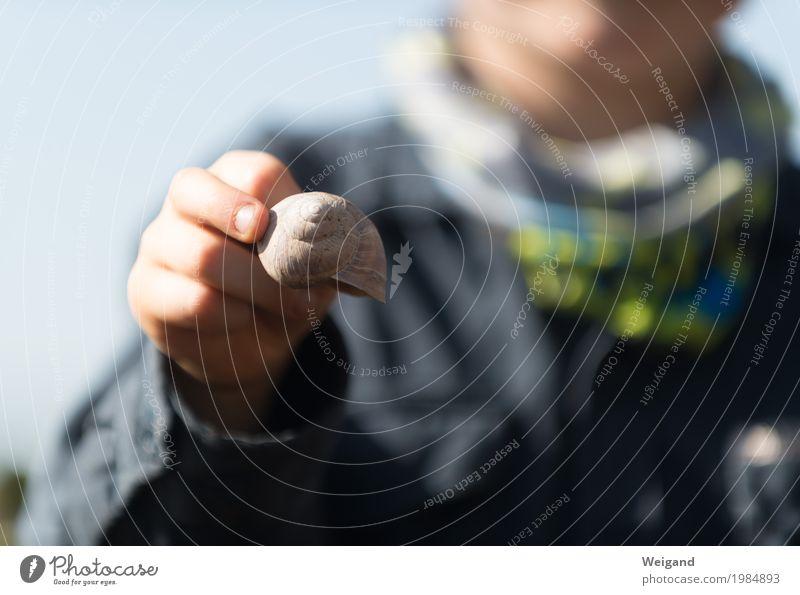 Outdoor-Spezialist Kind blau Hand Tier ruhig Schule Freizeit & Hobby Ausflug wandern Kindheit lernen beobachten entdecken Gelassenheit Kindergarten Schnecke