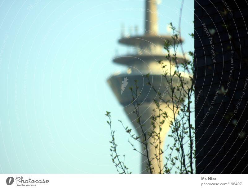 250 Sträucher Hauptstadt Bauwerk Gebäude Architektur Mauer Wand Wahrzeichen Zukunft Fernsehturm Düsseldorf Aussicht Aussichtsturm Höhe Deutschland Skyline