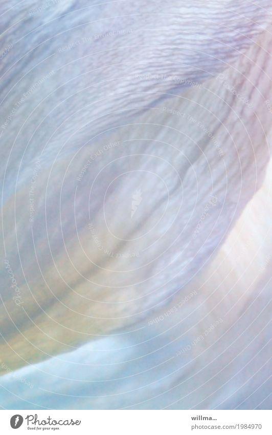 faltenweitwurf Blütenblatt Tulpe Pastellton hell hell-blau zart Falte Pflanze Farbfoto Nahaufnahme Strukturen & Formen