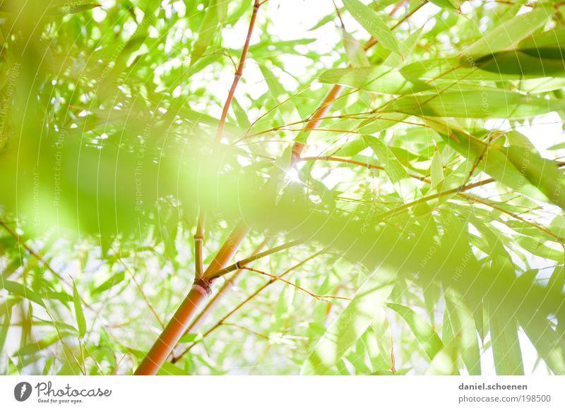 Bambusfrühling Umwelt Natur Tier Sonne Sonnenlicht Frühling Sommer Schönes Wetter Pflanze Sträucher Grünpflanze Park hell grün weiß Licht Sonnenstrahlen