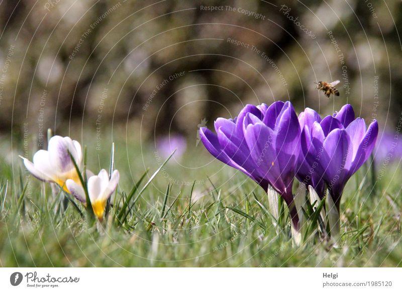 Frühlingswiese ... Natur Pflanze grün weiß Landschaft Blume Tier Umwelt Leben natürlich Gras klein Garten grau braun