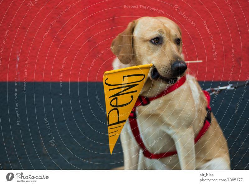 HH17 Fähnchentour - Der Knaller Hund Zeichen Schriftzeichen Schilder & Markierungen Hinweisschild Warnschild tragen warten gefräßig Farbfoto Wegsehen