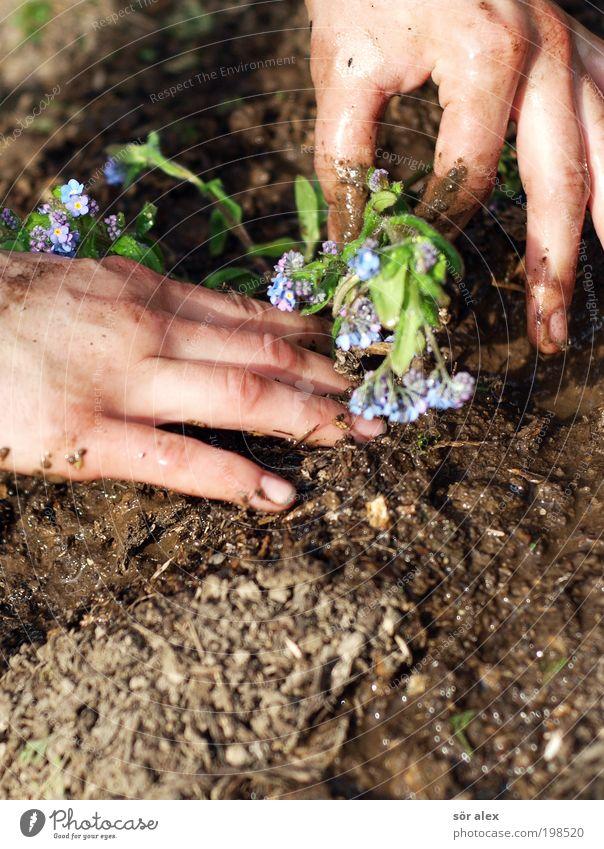 Vergissmeinnicht blau Hand grün schön Pflanze Blume ruhig Frühling Garten Erde braun Arbeit & Erwerbstätigkeit Freizeit & Hobby Beginn Wachstum Blühend