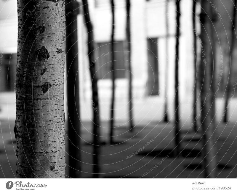 Großstadtdschungel Natur Baum Haus Wald Straße Garten Park Platz Design Perspektive Idylle Umweltschutz Ausdauer Industrieanlage Mittelpunkt Grünpflanze