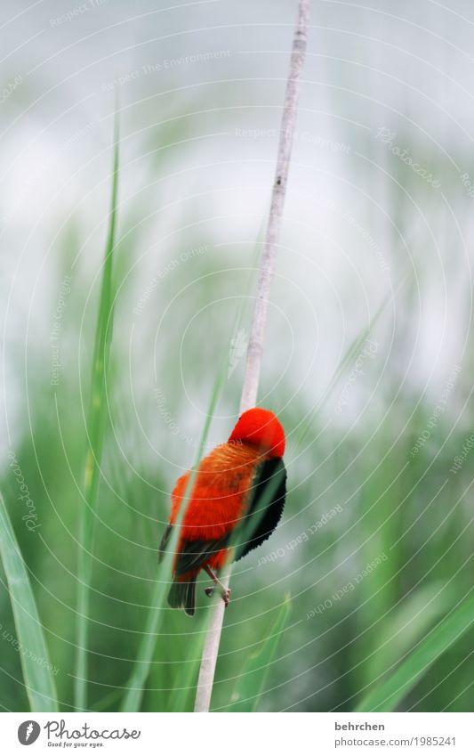 ein schöner rücken und so Natur Pflanze Blatt Tier Gras Park Schilfrohr