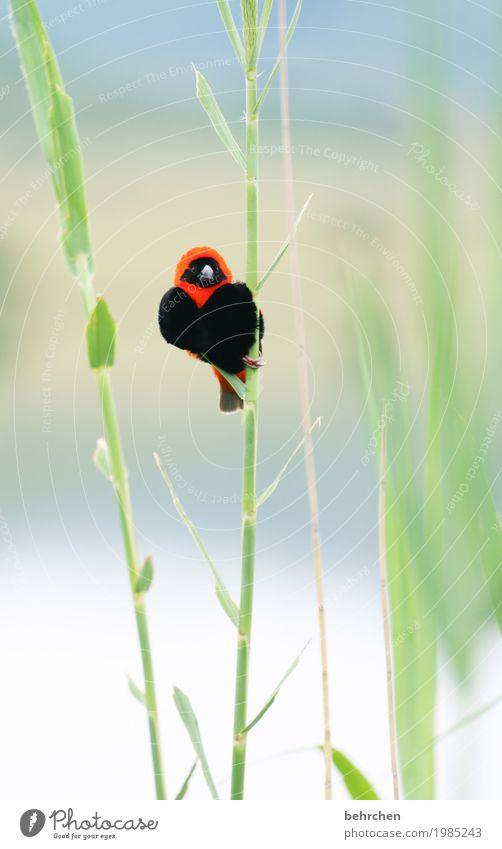 herzig Natur Ferien & Urlaub & Reisen Pflanze schön Blatt Tier Ferne klein Freiheit Tourismus Vogel fliegen Ausflug Wildtier Feder Flügel