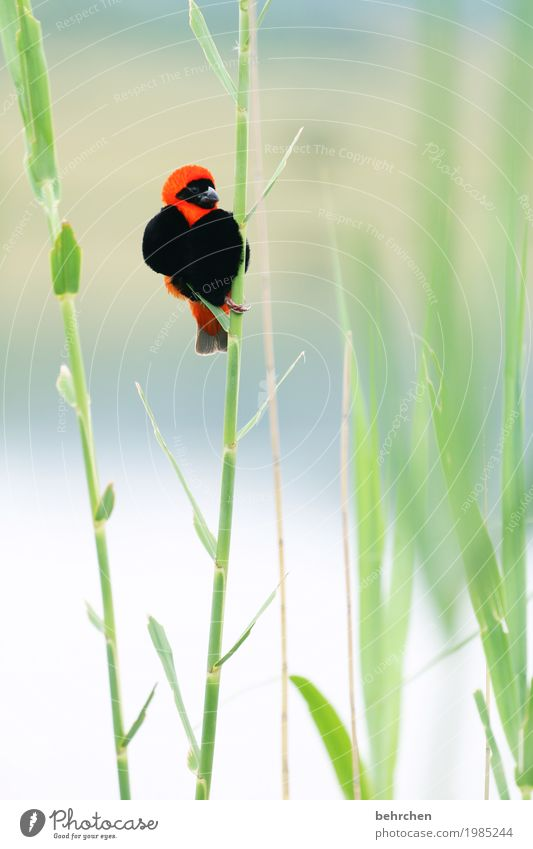 musik | vogelgezwitscher Natur Ferien & Urlaub & Reisen Pflanze schön Erholung Blatt Tier Ferne klein außergewöhnlich Freiheit Tourismus Vogel fliegen Ausflug