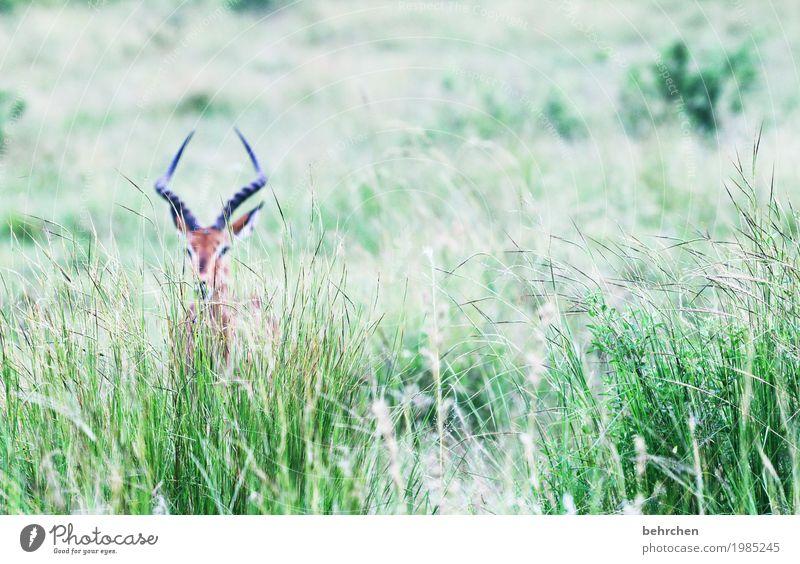 siehst du mich? Natur Ferien & Urlaub & Reisen Pflanze schön Blatt Tier Ferne Gras außergewöhnlich Freiheit Tourismus Park Ausflug Wildtier fantastisch