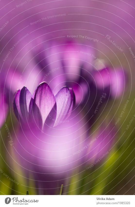 Frühlingslichter Natur Pflanze Blume Erholung ruhig Blüte Innenarchitektur Wiese Stil Glück Garten Design Park Zufriedenheit leuchten