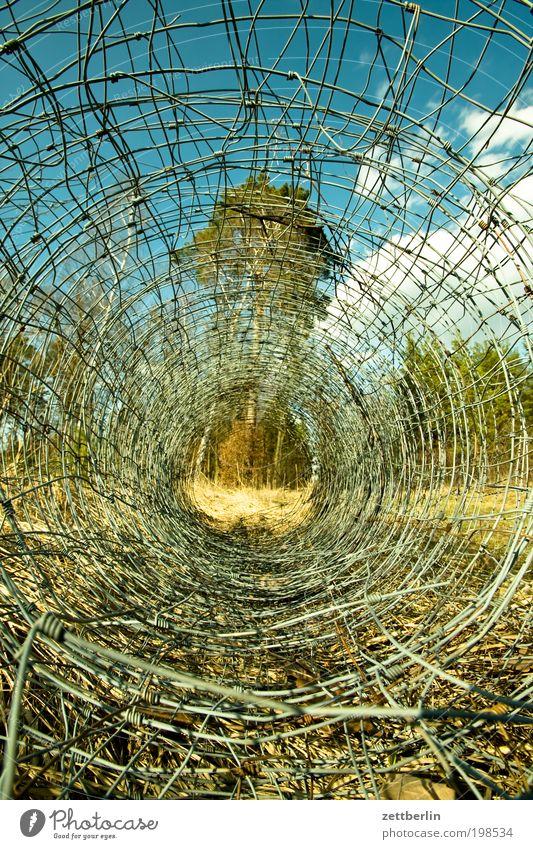 Maschendrahtzaun Zaun Drahtzaun Rolle abgerollt aufgereiht Gehege Sommer Brandenburg Baum Natur Durchblick Aussicht Perspektive Erholung Sauerstoff Filter