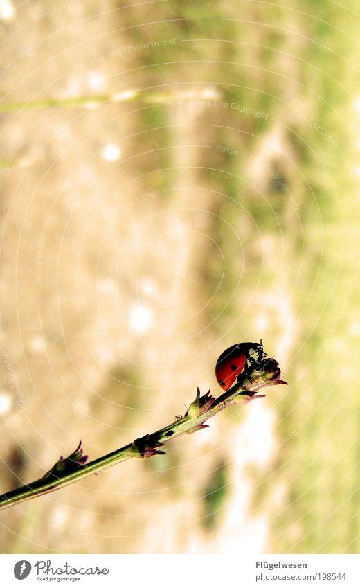 Die Welt mit anderen Augen sehn Natur Pflanze Tier Wiese Landschaft Kraft Wetter Umwelt Aussicht Ende bedrohlich Freizeit & Hobby Klima Insekt beobachten Punkt