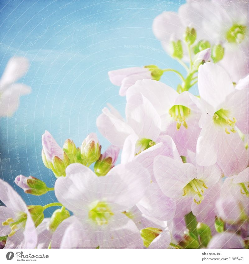 not perfect. Natur Pflanze Sonne Sonnenlicht Frühling Schönes Wetter Blume Blüte Wildpflanze Garten Park Wiese Duft ästhetisch elegant Sauberkeit Lebensfreude