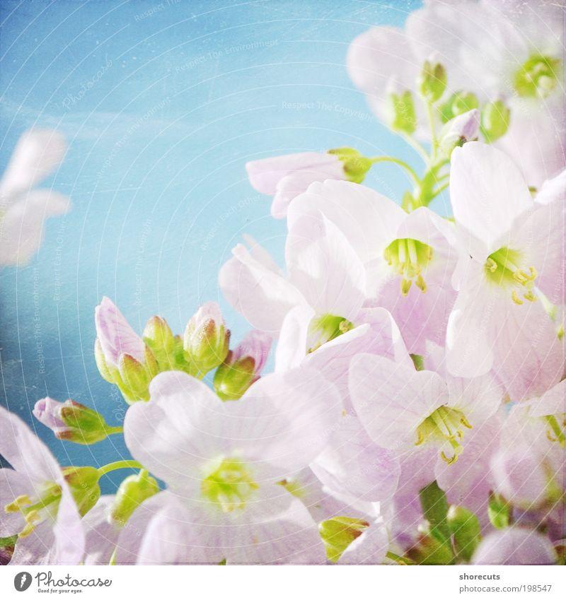 not perfect. Natur Pflanze schön Sonne Blume ruhig Blüte Frühling Wiese Garten Park elegant Kraft ästhetisch Lebensfreude Schönes Wetter