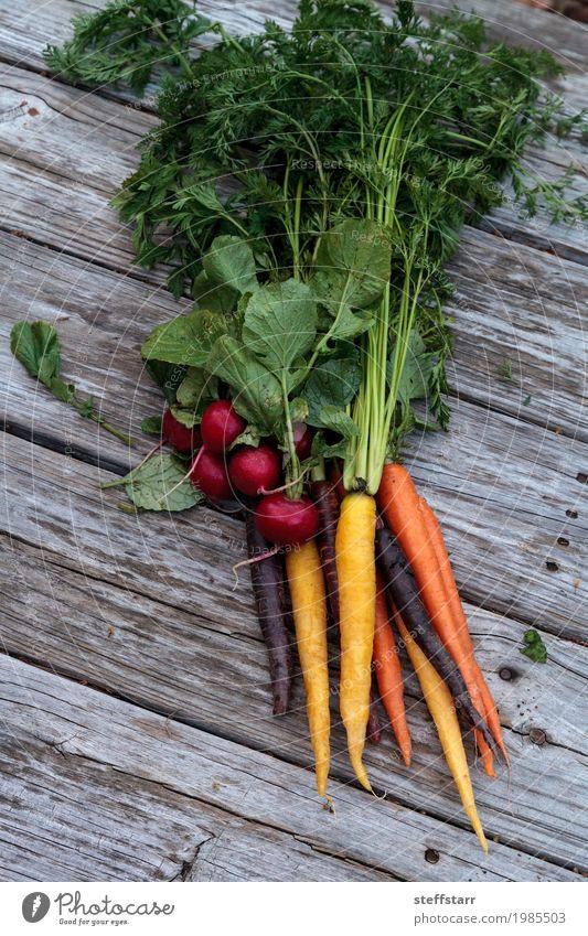 Organische rote Radieschen und Karotten Lebensmittel Gemüse Ernährung Essen Bioprodukte Vegetarische Ernährung Diät Gesundheit Gesunde Ernährung Pflanze