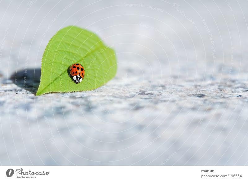 Sonnendeck Valentinstag Muttertag Natur Frühling Sommer Blatt Garten Tier Wildtier Käfer Marienkäfer 1 Zeichen Freundlichkeit Glück hell Lebensfreude