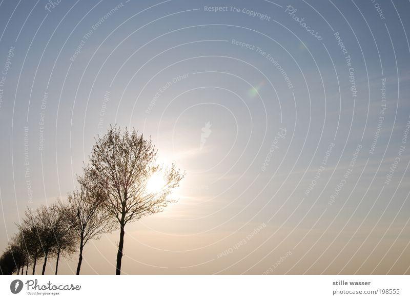 Der Frühling ist da Himmel Baum Pflanze Sonne Erholung Umwelt Landschaft Wege & Pfade Zufriedenheit Klima Wachstum harmonisch Umweltschutz Umweltverschmutzung