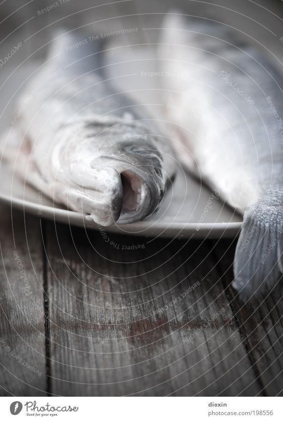 Es ist wieder Freitag, Baby! Natur blau Ernährung Tier grau braun Tierpaar Lebensmittel Umwelt Fisch Fisch Tiergesicht Vergänglichkeit Wildtier Appetit & Hunger Teller
