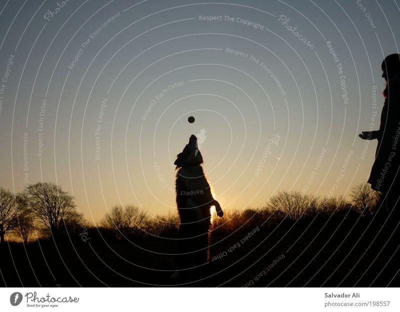 Schnappi Spielen Ball Landschaft Baum Feld Eckernförde Schleswig-Holstein Hund 1 Tier weich blau gold Freude Glück Lebensfreude schnappen apportieren Kunststück