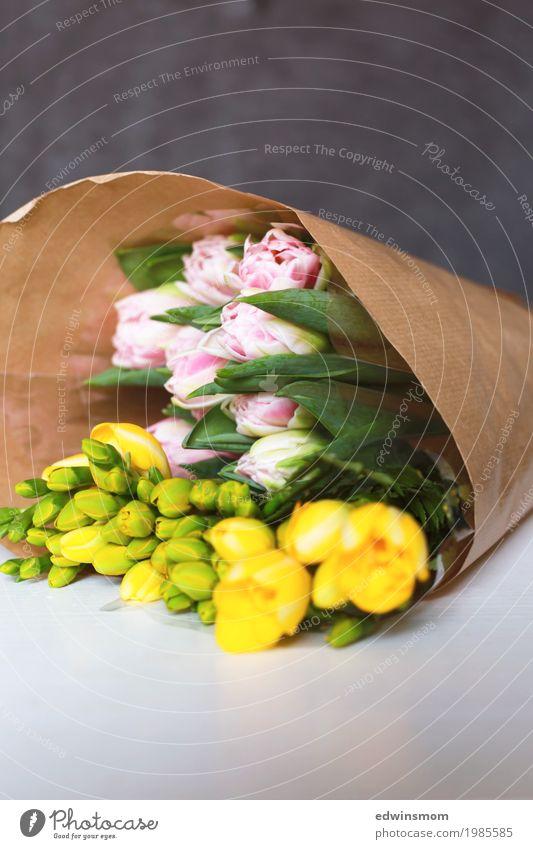 Blumengrüße Dekoration & Verzierung Natur Pflanze Tulpe Blüte Freesie Papier Verpackung wählen Blühend Duft kaufen verblüht authentisch elegant frisch neu schön