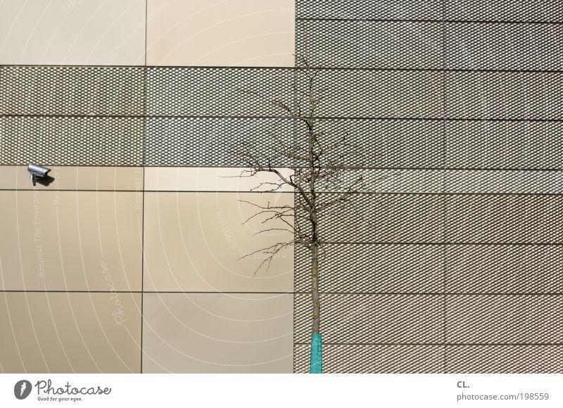 ... is watching you Stadt Baum Wand Mauer Architektur Gebäude Angst Fassade Wachstum Zukunft bedrohlich beobachten Technik & Technologie Sauberkeit Sicherheit