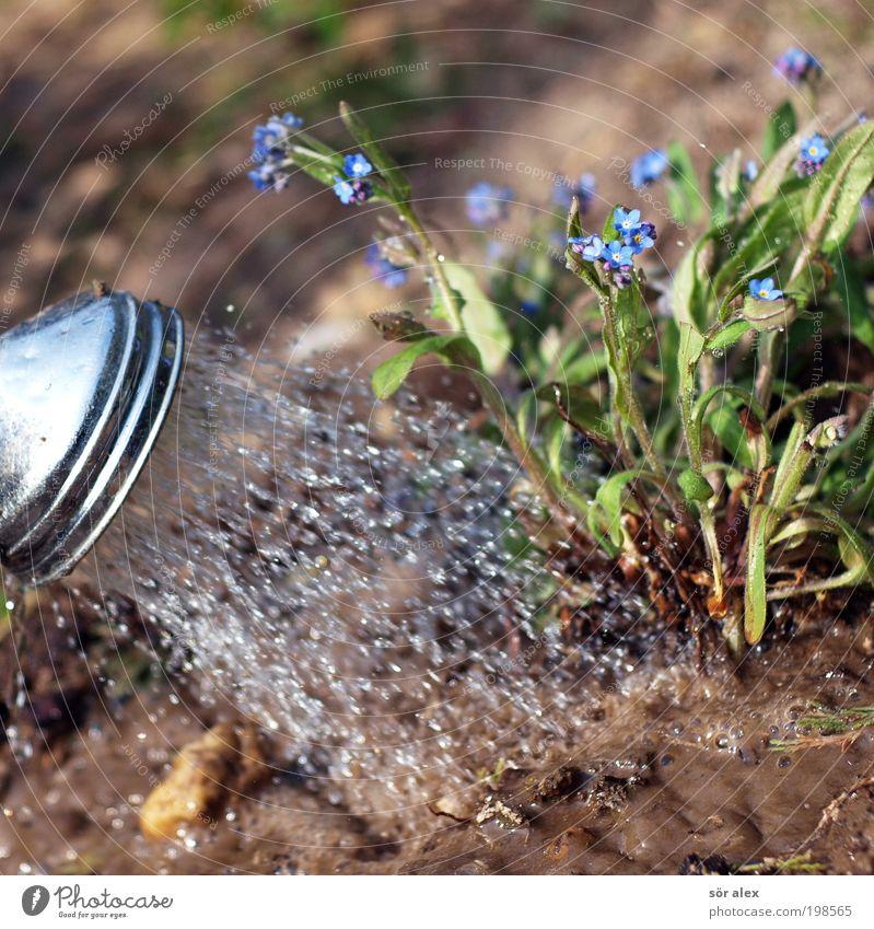 Gartenarbeit blau Wasser grün schön Baum Pflanze ruhig Erholung Metall Erde braun Arbeit & Erwerbstätigkeit Freizeit & Hobby nass Wachstum