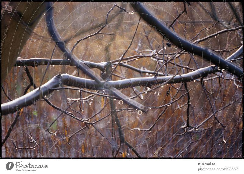 geästelig Natur Baum Pflanze Freude Tier Ferne Herbst träumen Regen Landschaft Kunst glänzend rund Sträucher Klima beobachten