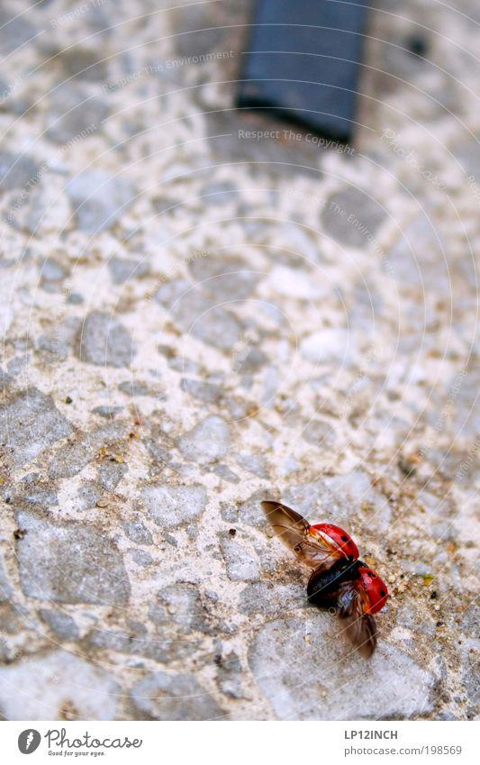 - - sich breit machen - - Umwelt Natur Sommer Luftverkehr Flughafen Flugplatz Käfer 1 Tier Stein fliegen krabbeln frei Freundlichkeit schön rot Fröhlichkeit