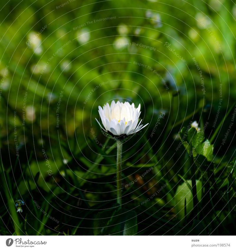 Alleinstellungsmerkmal Natur Pflanze grün Blume Einsamkeit Umwelt Blüte Gefühle Frühling Wiese Gras natürlich Glück frisch ästhetisch geheimnisvoll