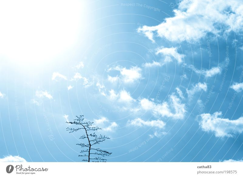 Immer der Sonne nach Natur Himmel Baum Sonne Wolken Gefühle Glück Luft Lebensfreude Sympathie Willensstärke Frühlingsgefühle