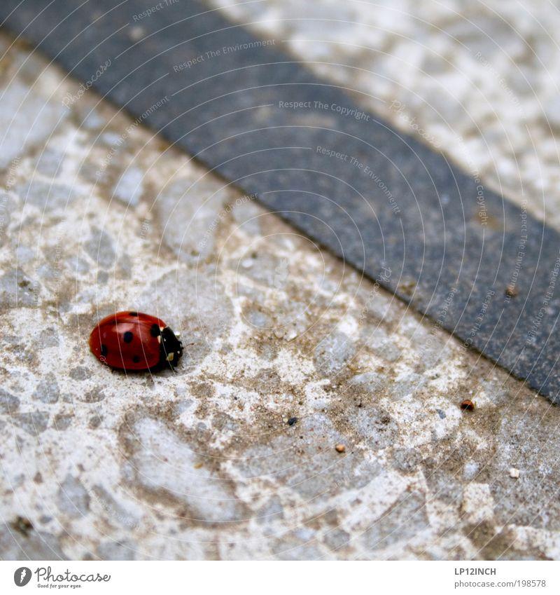 Neben der Spur Natur rot Tier Einsamkeit Umwelt Bewegung Garten Stein träumen Park gehen laufen Trauer Neugier Spuren Punkt