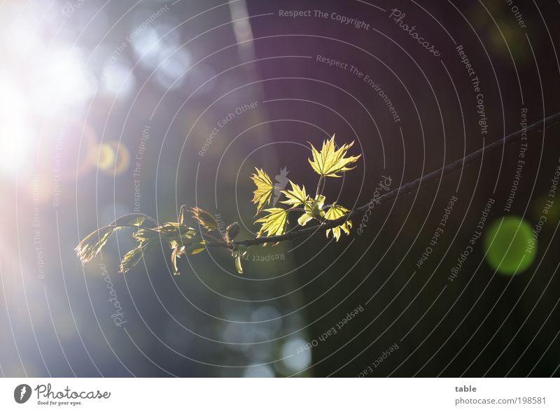 Aufbruch Baum grün Pflanze Blatt schwarz Wald Gefühle Frühling Holz Park braun glänzend Umwelt gold ästhetisch Wachstum