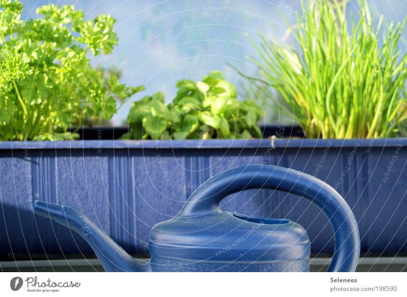 Kräutergarten Lebensmittel Gemüse Ernährung Bioprodukte Vegetarische Ernährung Kräuter & Gewürze Petersilie Basilikum Schnittlauch Umwelt Natur Schönes Wetter
