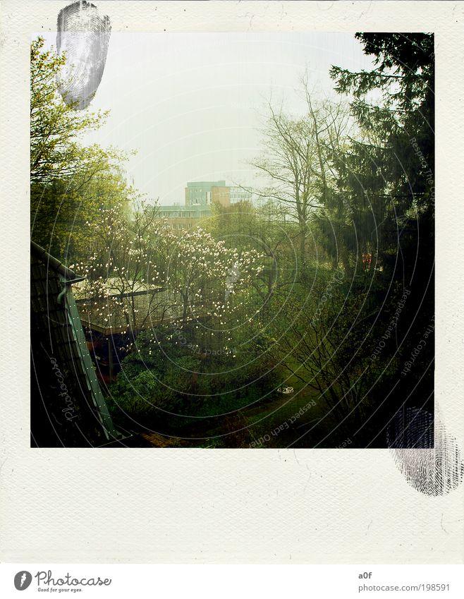 spring Baum Pflanze Wolken dunkel Garten Denken Frühling Zufriedenheit Nebel leuchten trashig Wohlgefühl Polaroid Kleinstadt