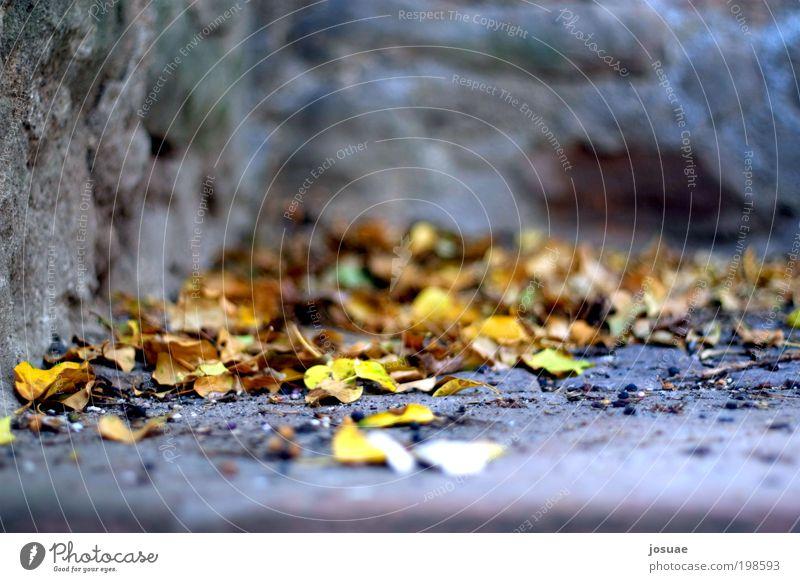 Oberstadttreppenlaub Natur alt grün Sonne Blatt ruhig gelb Umwelt Herbst Wand Garten Mauer Park braun dreckig Treppe