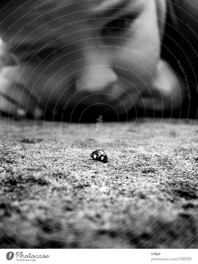 Käfer mit Flutlicht Natur Tier ruhig Gesicht Umwelt Junge Stimmung Kindheit Zusammensein Geschwindigkeit Erfolg Perspektive beobachten Neugier Konzentration Kleinkind