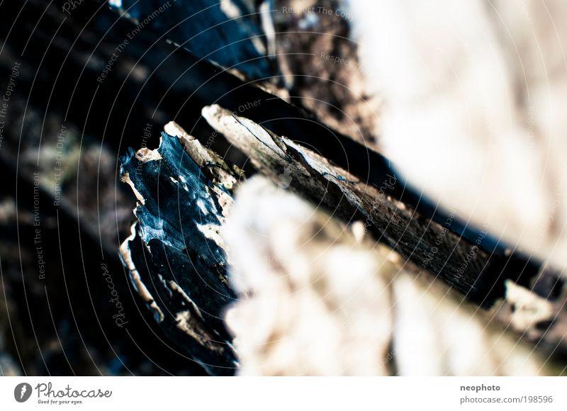 Rohstoff Natur alt weiß Baum blau Pflanze schwarz gelb Holz Umwelt einfach eckig Splitter Textfreiraum links