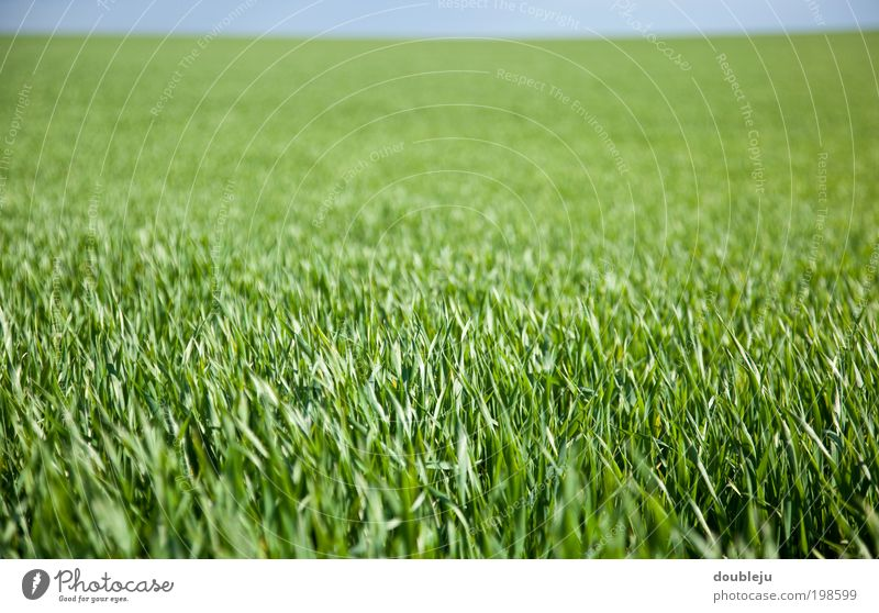 mehr grün Natur Himmel grün Pflanze Sommer Wiese Frühling Landschaft Luft Feld Umwelt Erde