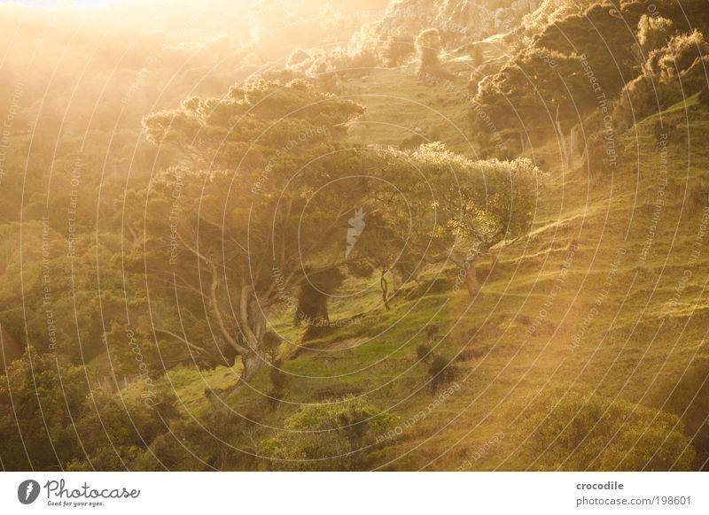 new Zealand XXXII jetzt auch in Farbe :D Natur Pflanze Sonne Baum Landschaft Wald Berge u. Gebirge Umwelt Wärme Gras Felsen Zufriedenheit Sträucher ästhetisch